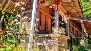 武蔵御嶽神社、レンゲショウマ