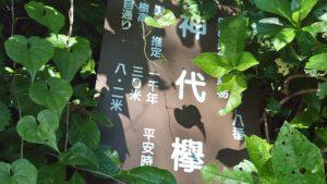 武蔵御嶽神社、神代ケヤキ