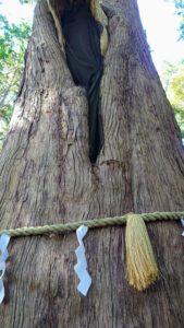 麻賀多神社、大杉